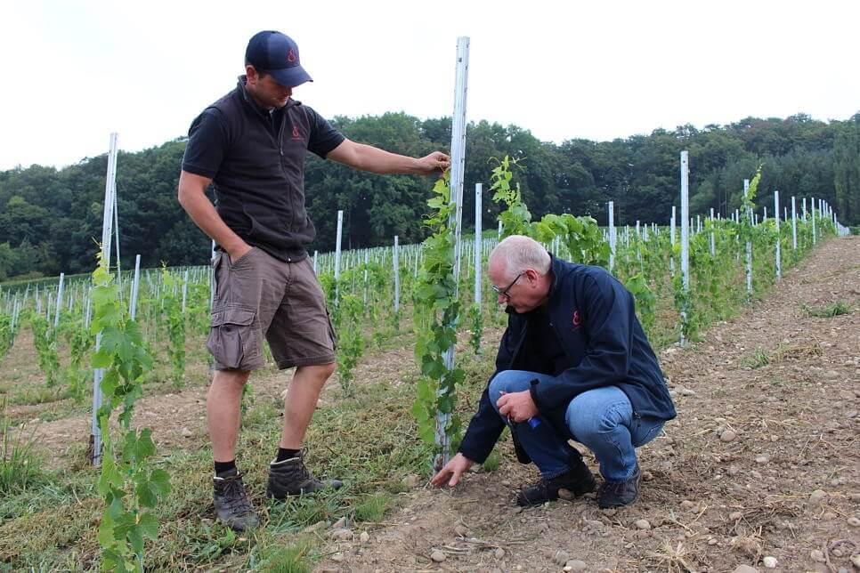 Die im Mai gepflanzen Jungreben werden dagegen erst bis in drei Jahren Früchte tragen. Links im Bild Winzermeister Adrian Häfner, der ursprünglich aus St. Blasien stammt, rechts Georg Netzhammer.